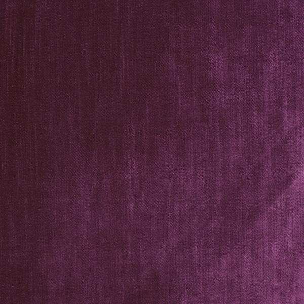 Prince Velvet- Victoria