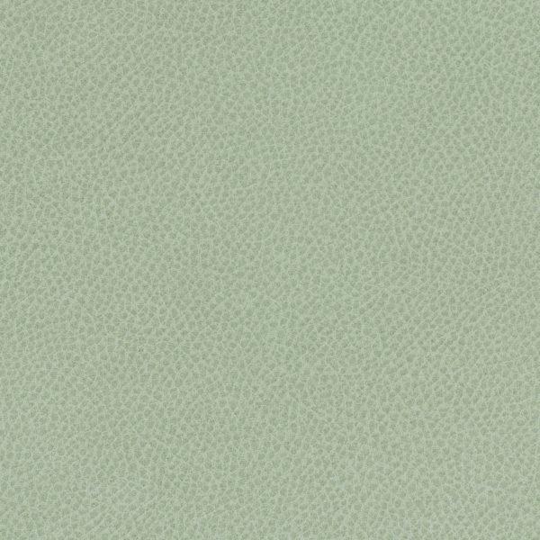 Steinbeck- Aloe